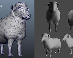 Male Female Sheep AAA 3D model