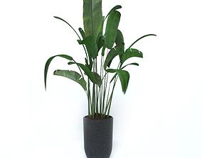 nature 3D model BANANA TREE