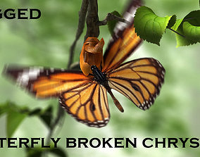 3D model butterfly broken chrysalis