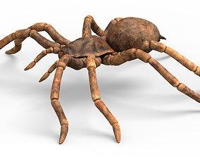 3D model Tarantula Spider With PBR Textures