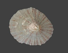 3D model Limpet Seashell Photogrammetry sea-snail