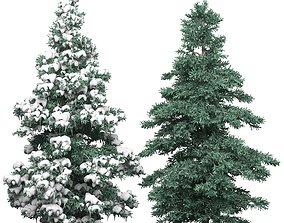 Spruce 1 3D