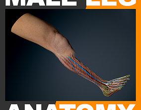 3D model Human Male Leg Anatomy