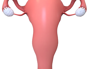 3D model Female Reproductive System