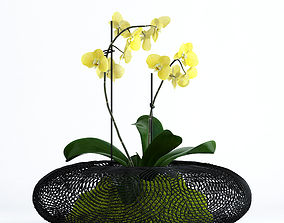 3D model Orchid in grid vase
