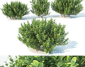 3D model park Buxus Sempervirens Nr3 - Three sizes