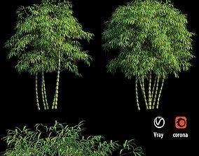 Bambusa ventricosa 03 3D model