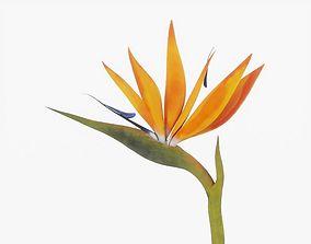 Bird of Paradise Flower 3D model