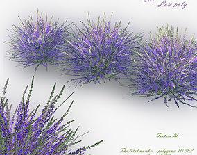 3D model low-poly Lavender Bush