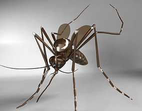 Aedes aegypti mosquito 3D model
