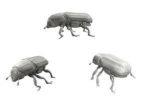 Realistic Beetle model 3D
