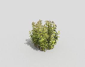 3D asset game-ready grass Plant