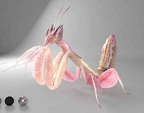 3D model Mantis insect
