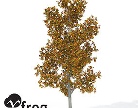 3D model XfrogPlants Autumn Smooth Leaved Elm