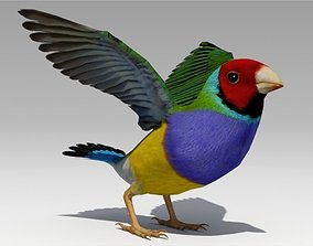 3D asset Gouldian Animated