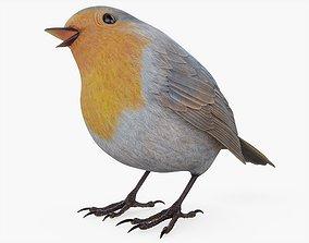 3D PBR Robin Bird Posed