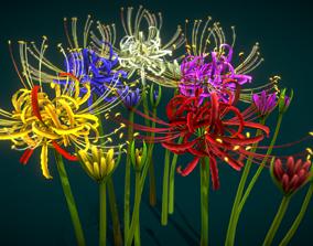 Flower Lycoris Radiata 3D asset