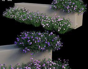 Ruellia brittoniana plant set 04 3D