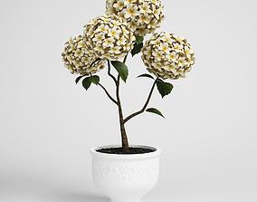 flower-pot 3D CGAxis flower