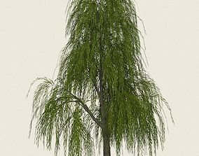 3D asset Game Ready Willow Tree 02