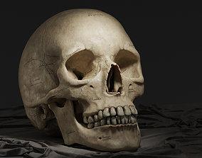 Human Skull - Textured Midpoly 3D model