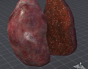 3D model Spleen human