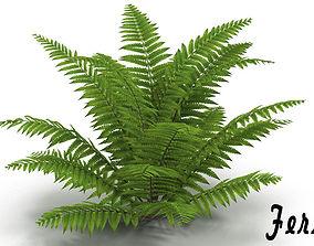 Fern 3D model bushes