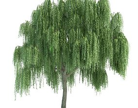 Green Weeping Tree 3D model