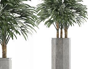3D Single Plant 15
