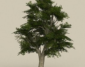 3D asset Game Ready Tree 07