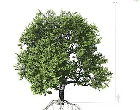 Broadleaf Tree 001 3D