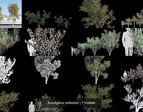 3D Eucalyptus collection
