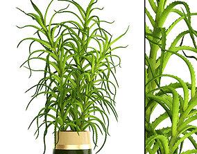 3D model Aloe vera plant in pot