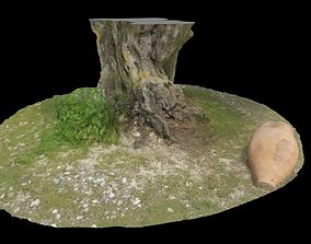 ANCIENT 1800 YEARS TREE TRUNK 3D model