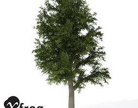 3D model XfrogPlants European Beech 1