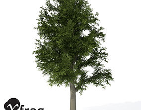 XfrogPlants European Beech 1 3D model