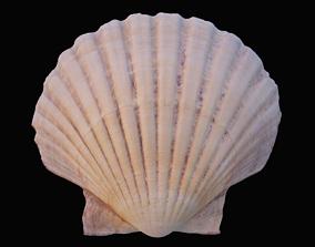 Scallop sea shell 3D model VR / AR ready