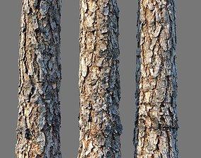 bark Pine wood 8k seamless material 3D asset