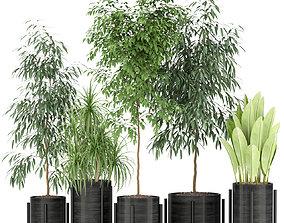 3D model Plants collection 345