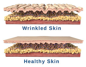 3D Skin Cross Section