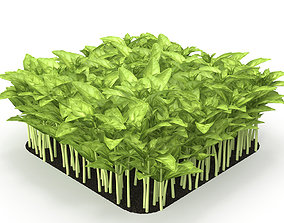 Cinnamon basil rect 3D model