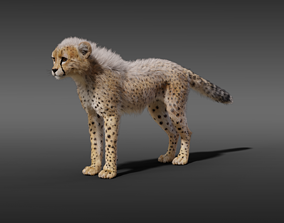 3D model Young Cheetah With Fur