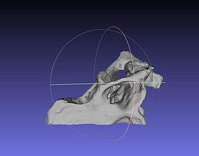 Psittacosaurus Right Half of Skull 3D print model