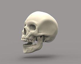 science 3D printable model Skull with teeth