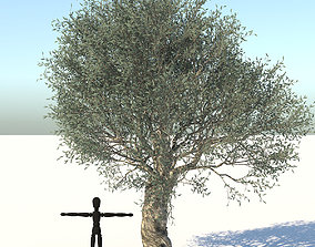 3D model low-poly Olive Tree