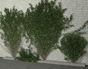 ivy wall 3D