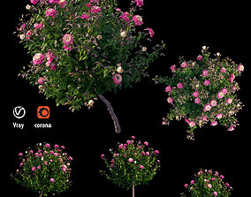 Plant rose set 05 3D model rose-bush
