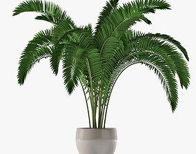 Palm 07 3D