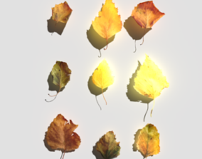 Dry Birch Leaves Pack 3D asset