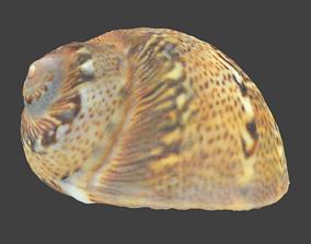 Patterned Spiral Seashell Photoscan 3D asset